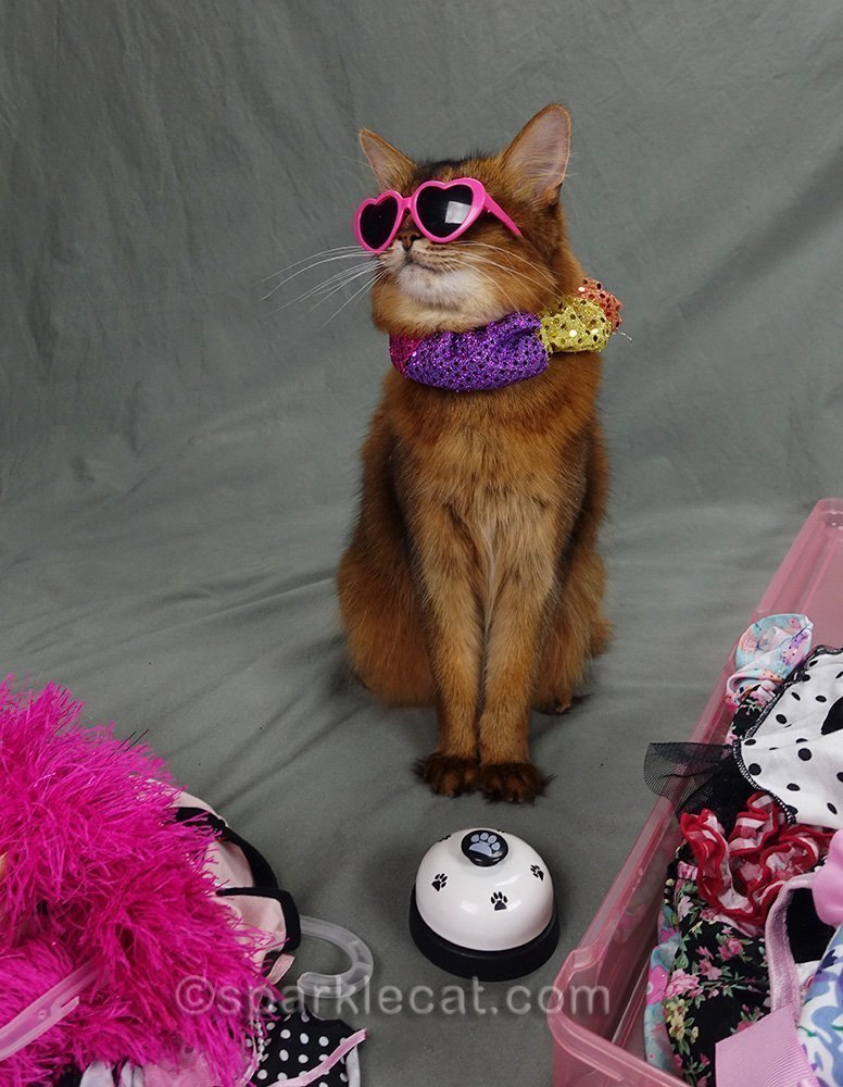 somali cat wearing pink heart sunglasses