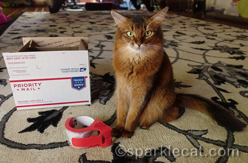 somali cat with shipping box and packing tape