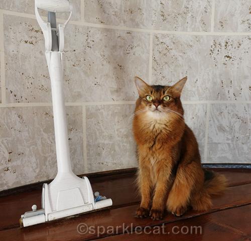 somali cat posing with floor mop