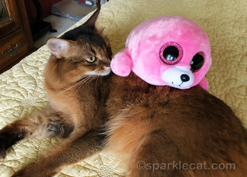 somali cat with seal stuffie