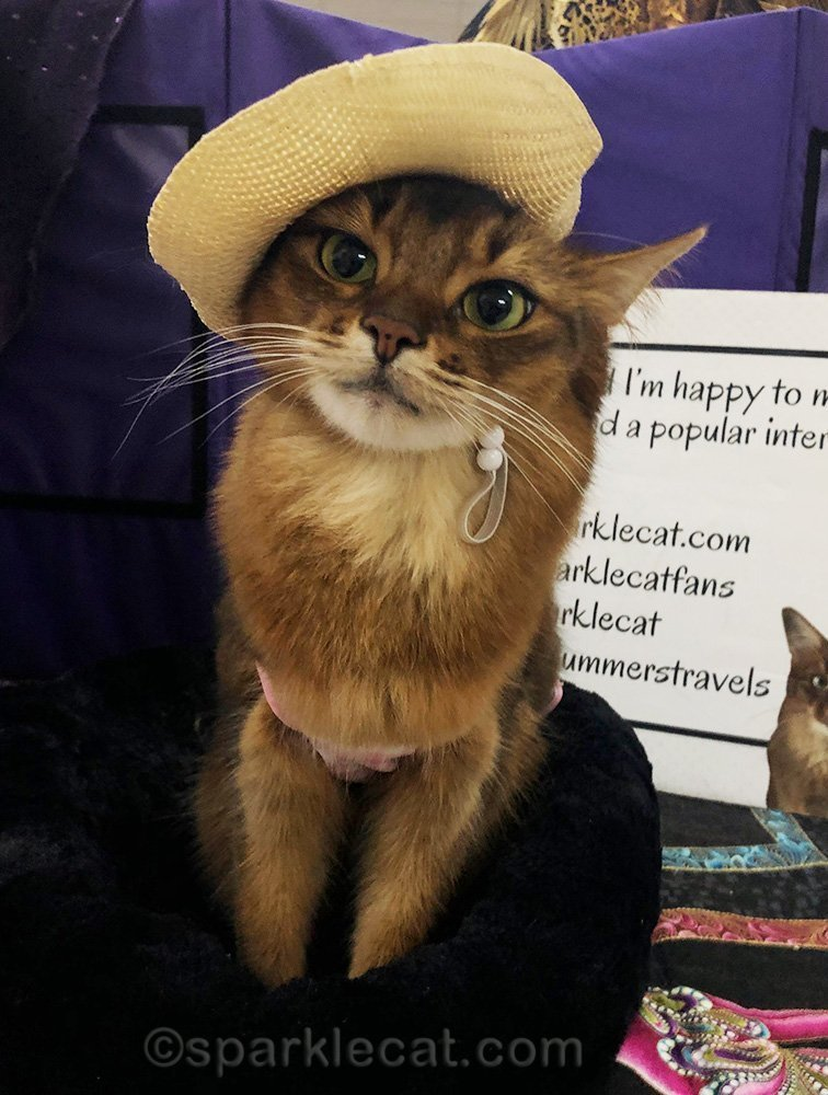 somali cat wearing a nice straw hat