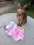 Summer has a Caturday modeling session in which she wears several little seen outfits.