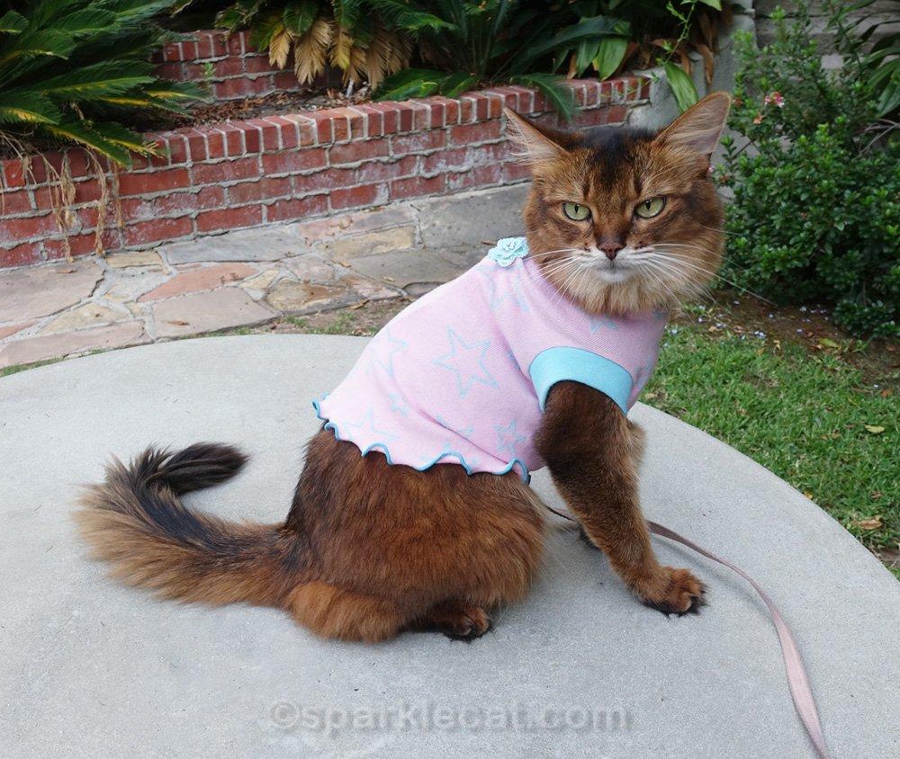 Somali cat wearing a pink t-shirt