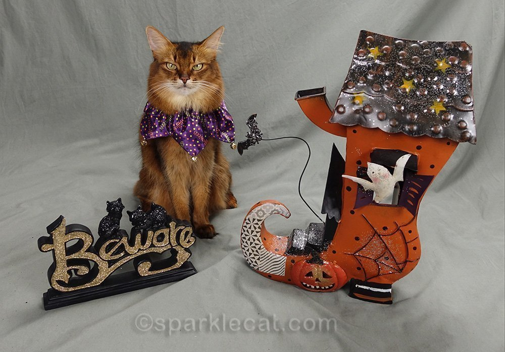 somali cat with Halloween prop for 2020 calendar