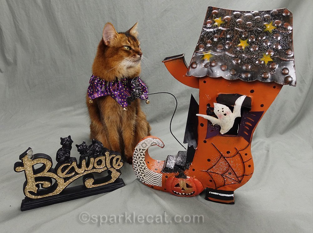 somali cat checking out Halloween shoe house