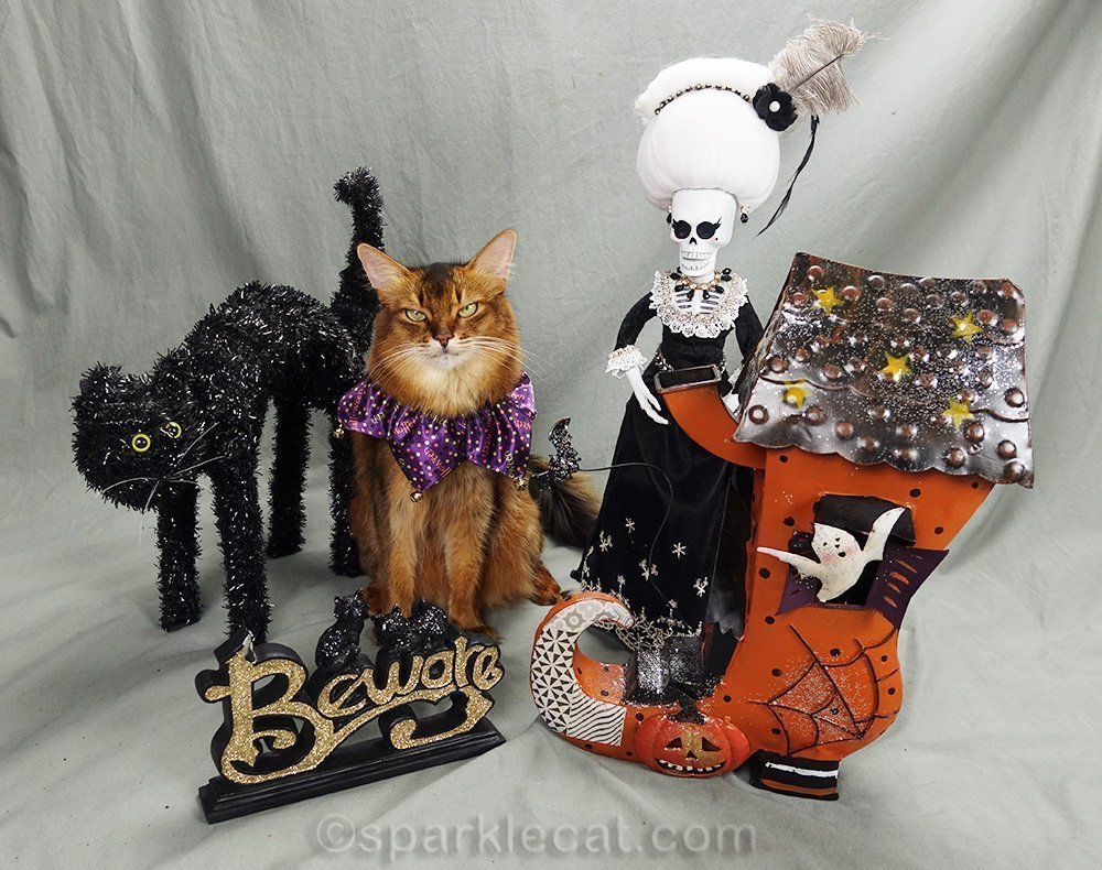 somali cat annoyed by all the Halloween props