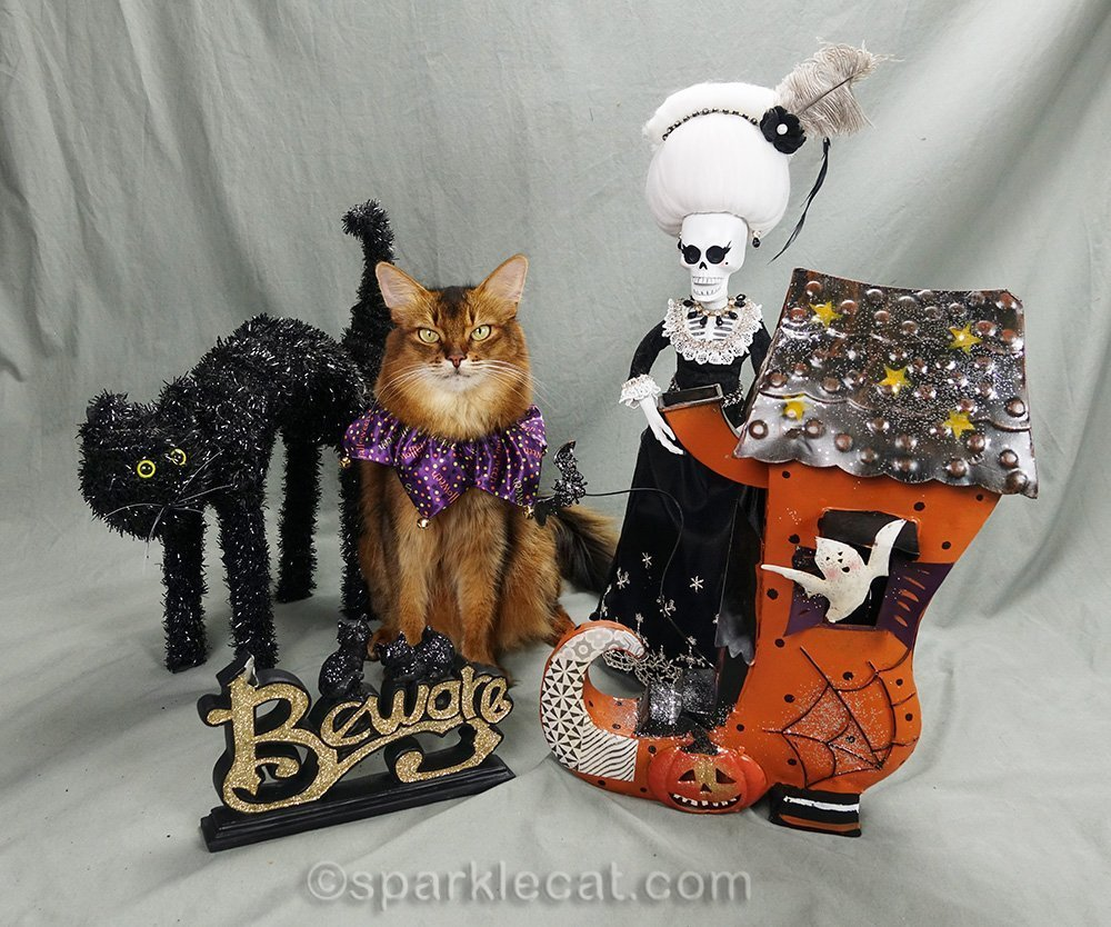 somali cat posing with Halloween props