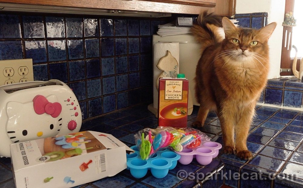 somali cat getting ready to make chicken broth popsicles