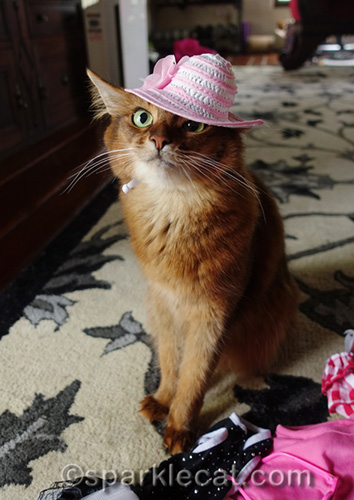 somali cat wearing pink and white hat