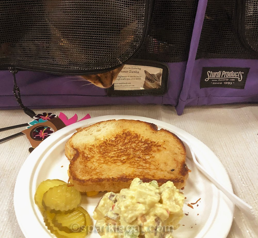 grilled cheese sandwich, and somali cat trying to sneak up on it