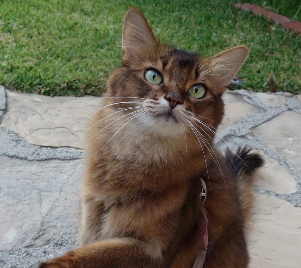 Summer's new video includes a cat training tip, along with her outside training.