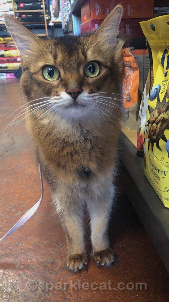Summer et son humain ont une visite productive dans une animalerie lorsqu'ils s'arrêtent pour acheter de la nourriture pour chats et quelques autres articles