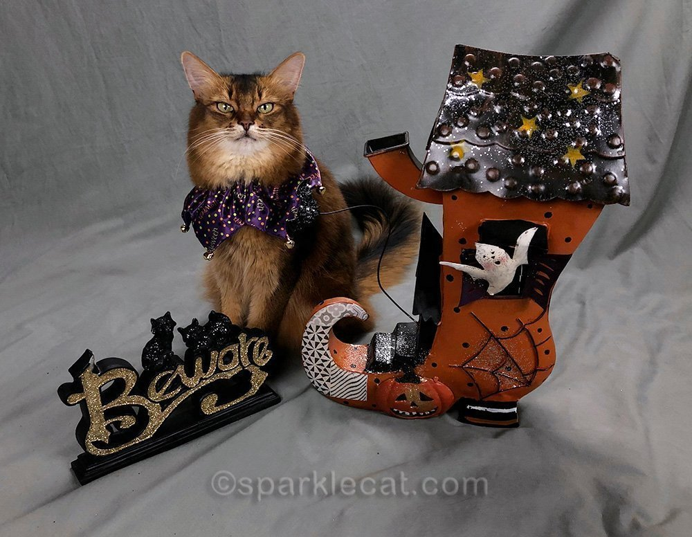 somali cat with metal haunted shoe and beware sign