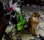 Summer asks her readers to help her choose from her awards dresses for the Cat Writers virtual awards show.