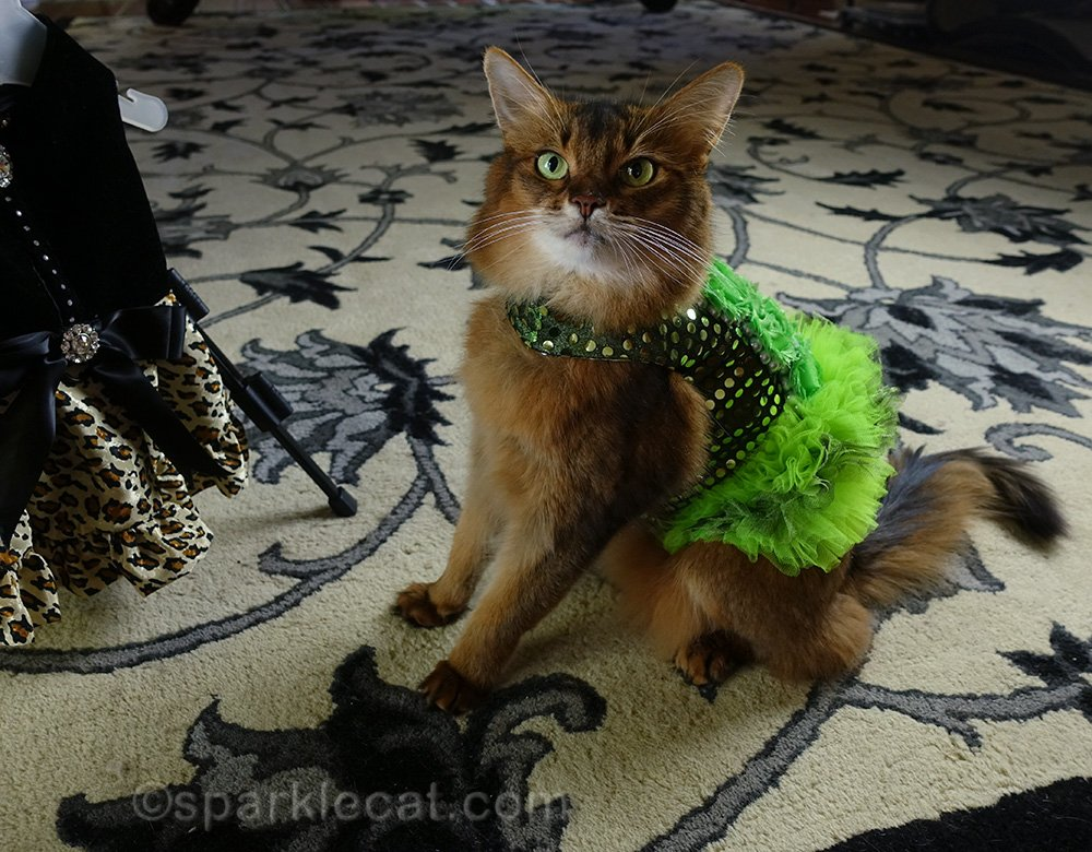 somali cat wearing fluffy and sparkly green dress