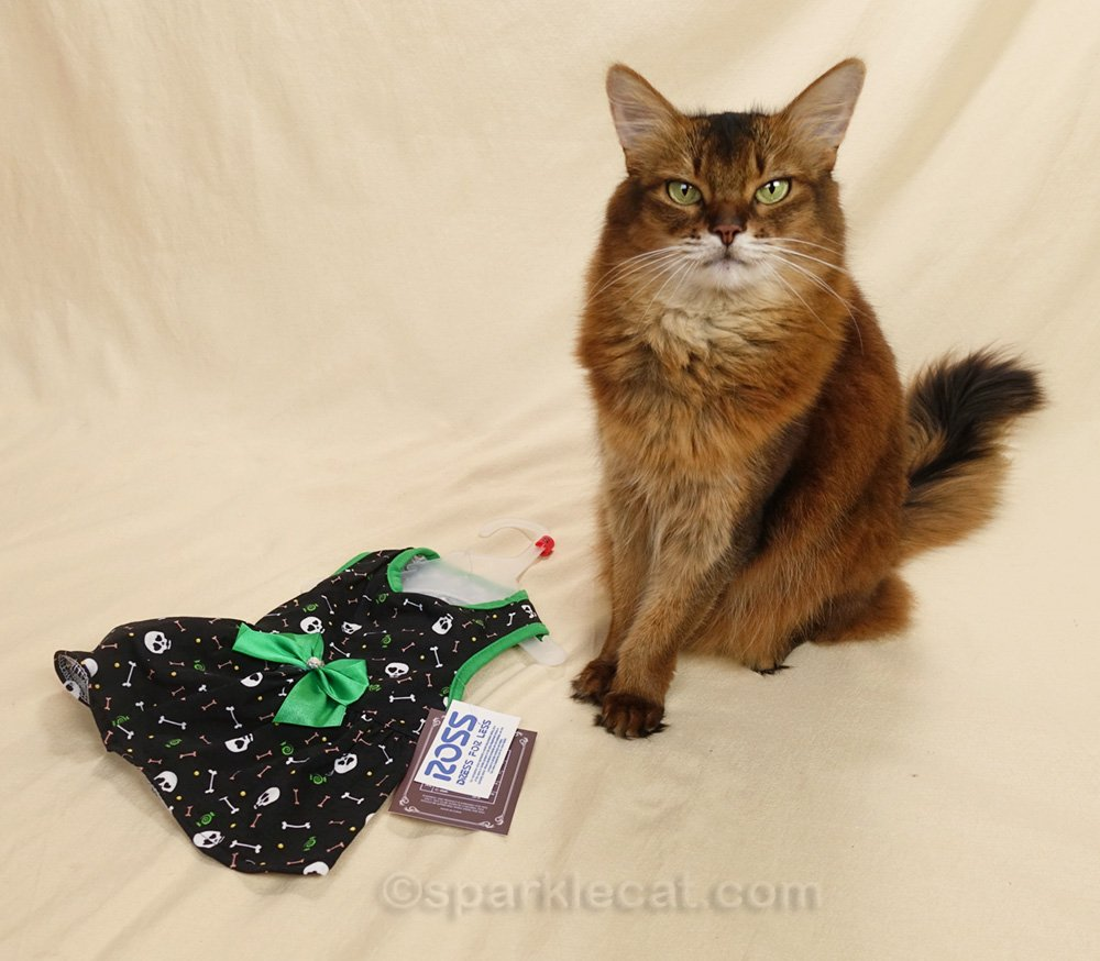 Summer gets a new cat dress and models it. She even has the perfect accessory for it!