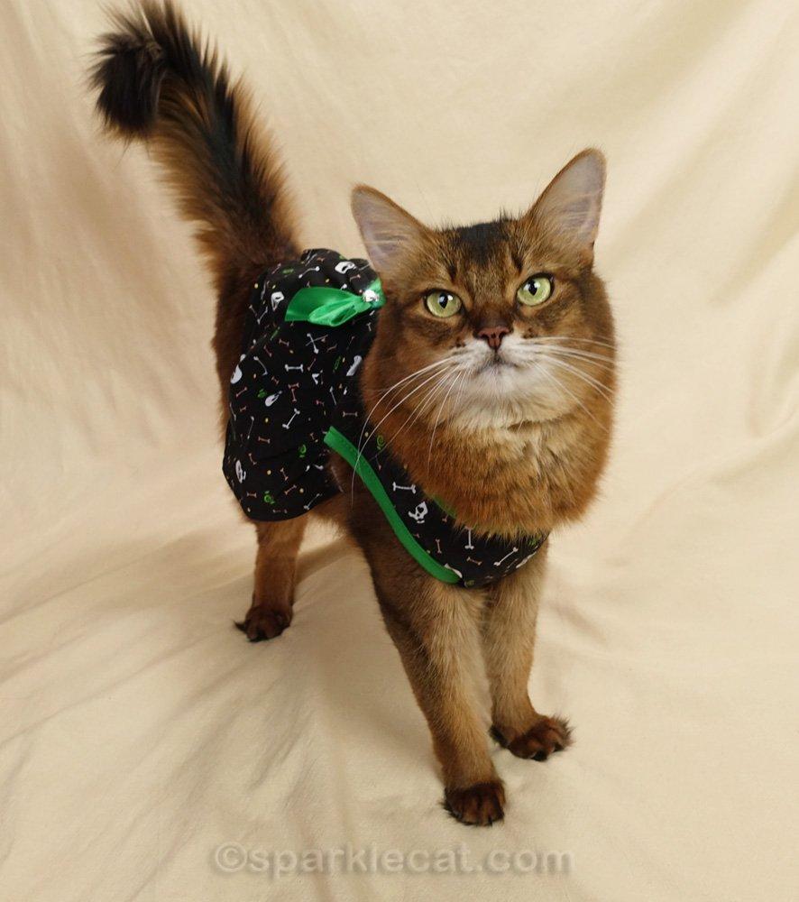 somali cat in a black Halloween cat dress with green trim