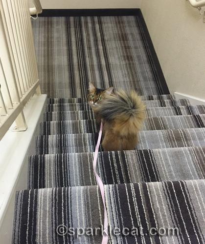 somali cat going down hotel stairs