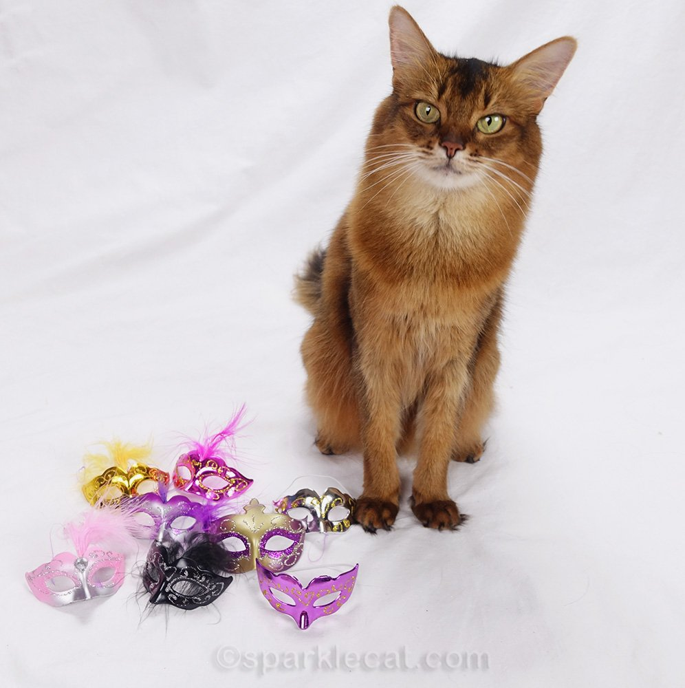somali cat posing with a selection of Mardi Gras style masks