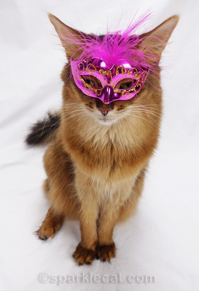 masked kitty