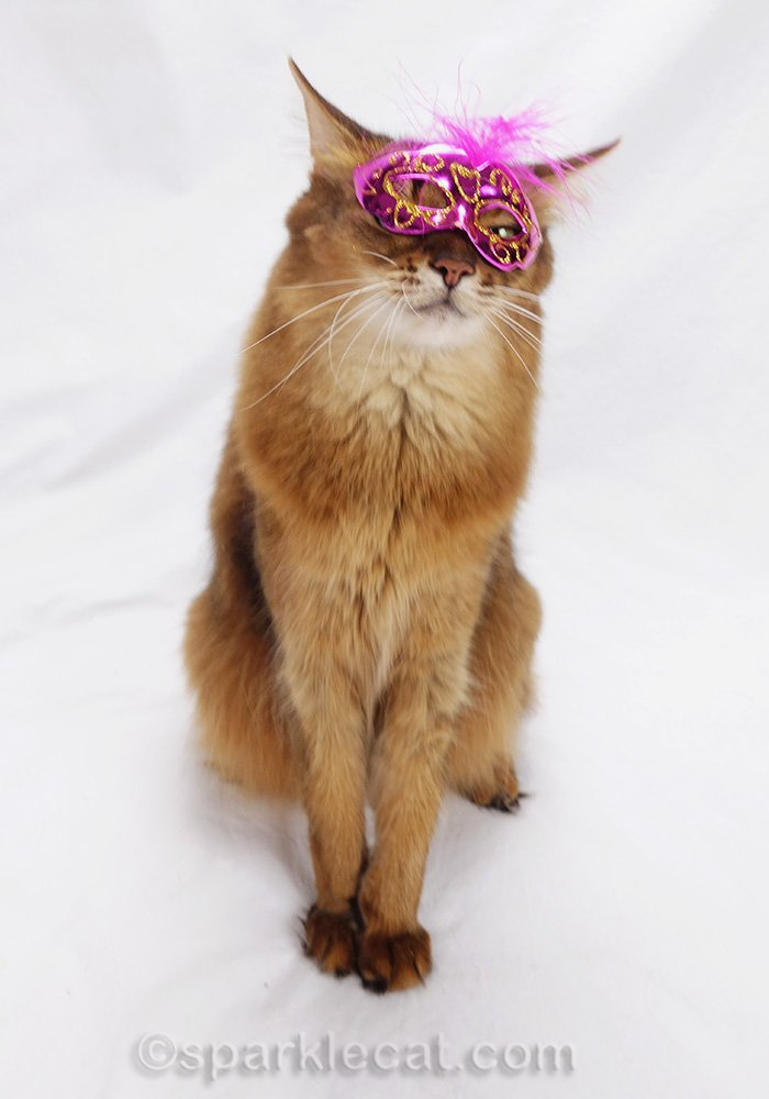 somali cat with mask about to fall off