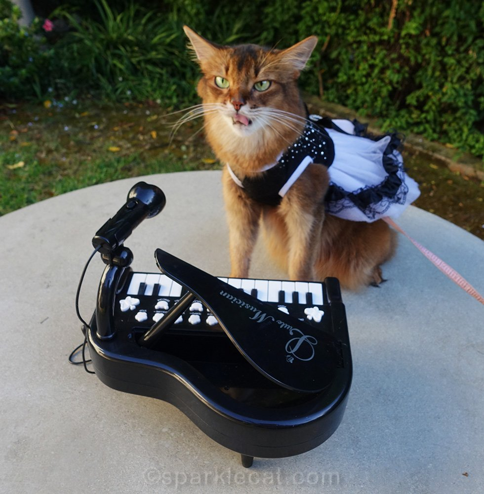 somali cat making bad rock star face
