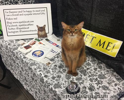 somali cat at her Pet Me Cat station