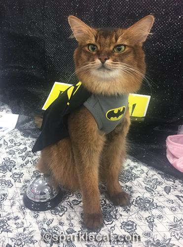 somali cat in batcat costume
