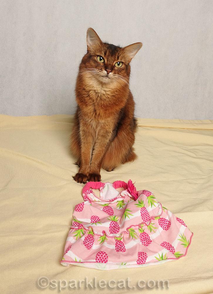 somali cat with new pineapple print dress