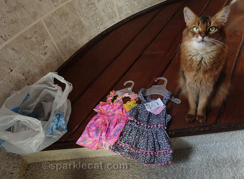 somali cat with two cat dresses from ross