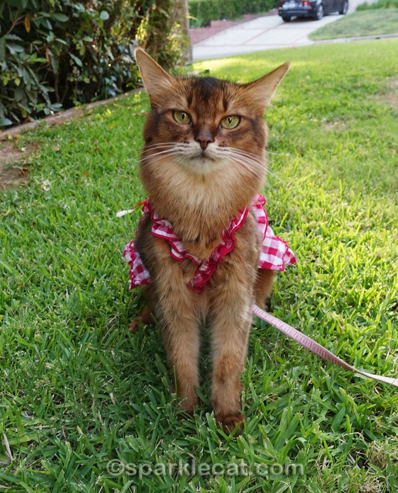 Summer shares a Caturday flashback that includes a short version of one of her summer fashion videos.