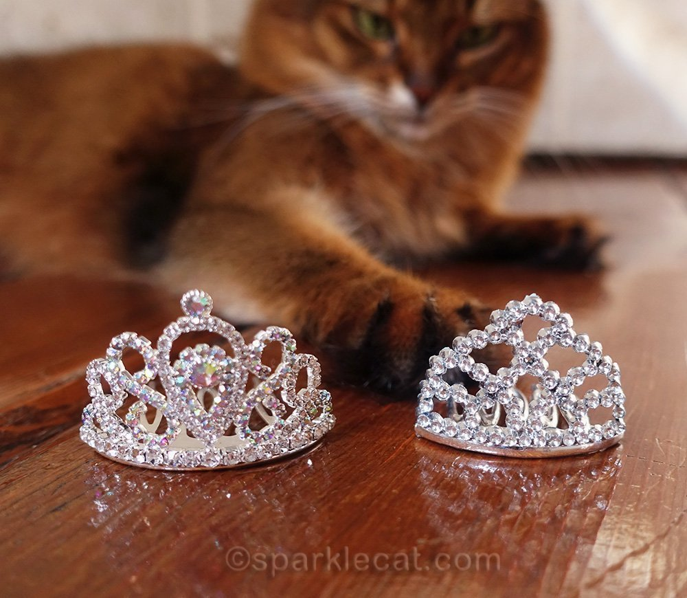 somali cat with two of her tiaras
