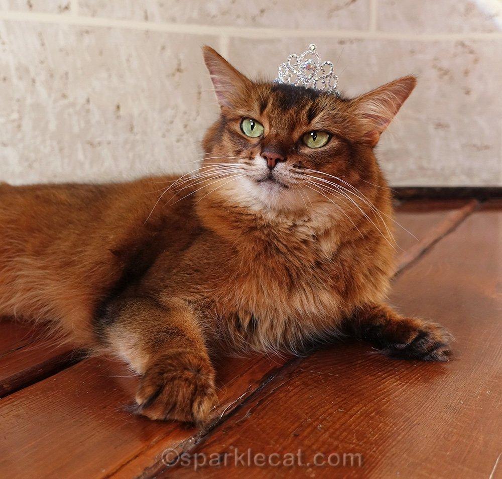 somali cat wearing her little tiara
