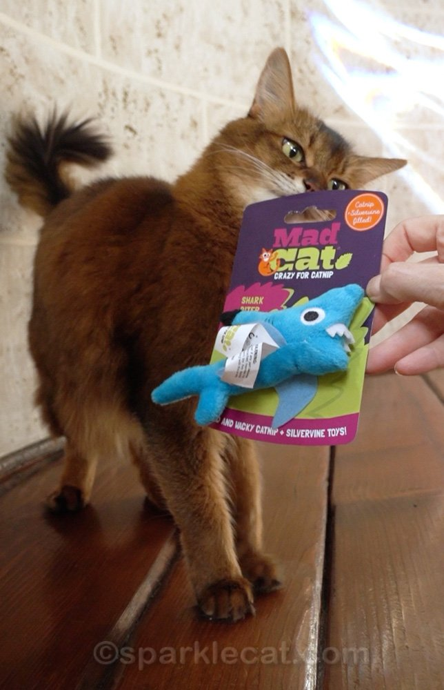 Summer loves doing tricks. In fact, she may enjoy them even more than her new shark cat toy - and this short video is proof!