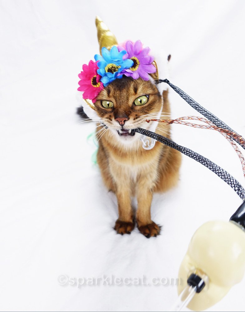 somali cat with unicorn horn playing with cat toy