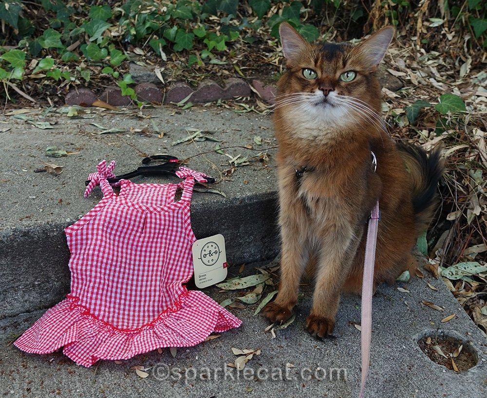 Summer tries on a new-ish cat dress, and it does not work out.