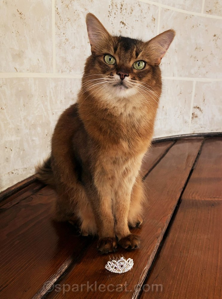 somali cat with tiara at her paws