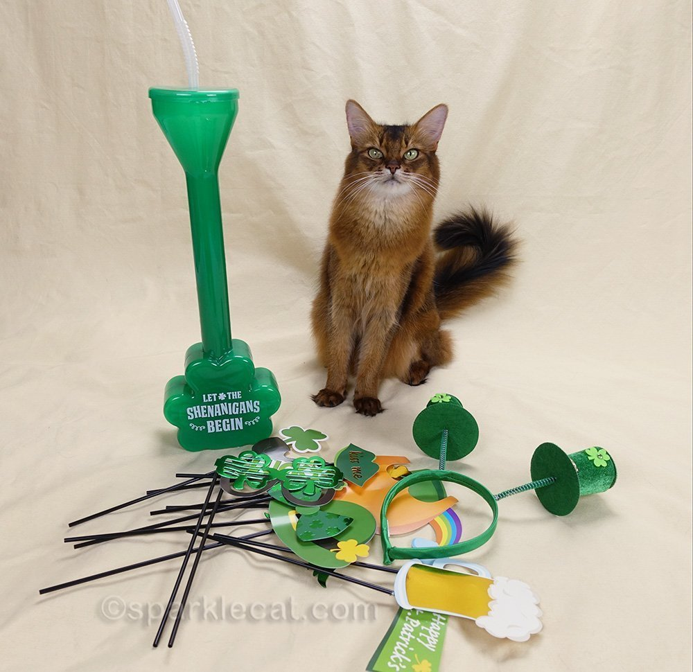 somali cat with st. patrick's day props, and not enough shenanigans