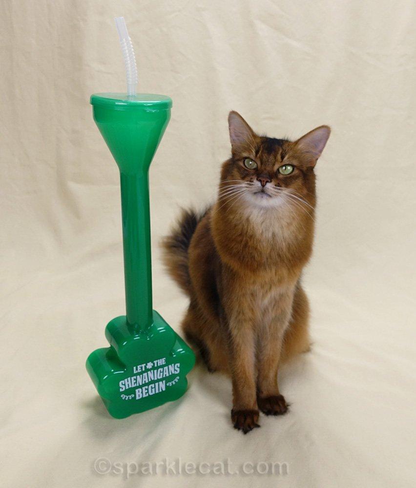 somali cat with shenanigans half yard drinking glass