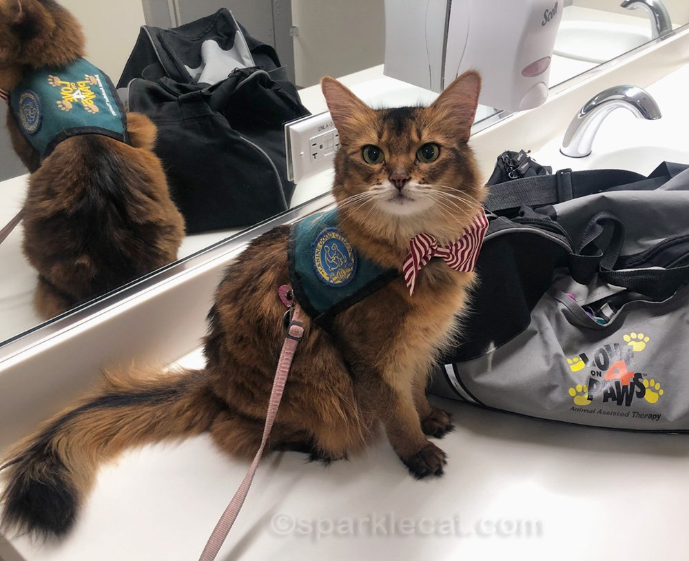 During her latest visit to the children's hospital, Summer discovers she is a celebrity therapy cat when she is recognized from her TikTok.