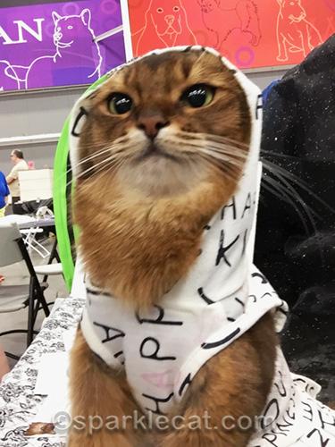 awkward photo of somali cat wearing hoodie