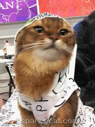 somali cat shaking hoodie off her head