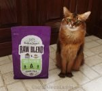 somali cat posing with Stella and Chewy Raw Blend cage free kibble and raw morsels blend.