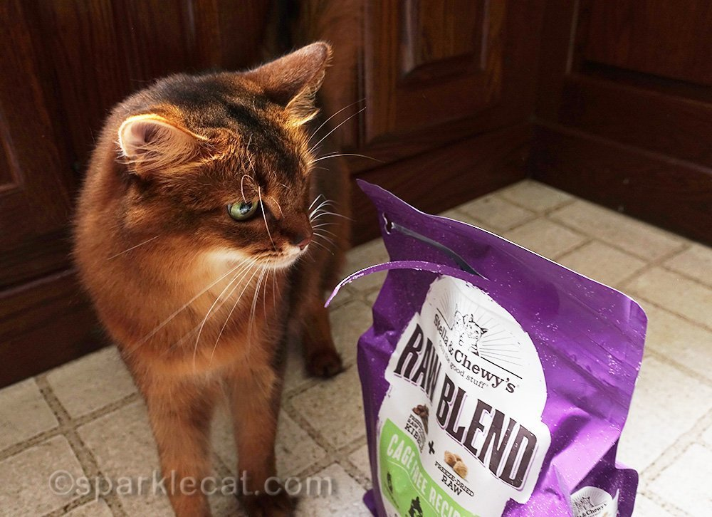 somali cat looking at half opened bag of Stella and Chewy Raw Blend