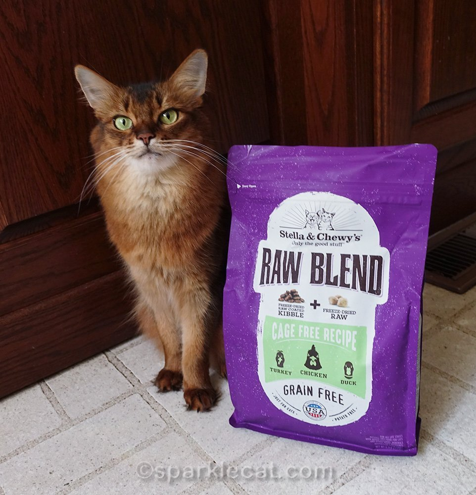 somali cat posing with Raw Blend cage free kibble recipe
