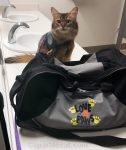 therapy cat in Shriners Medical Center restroom
