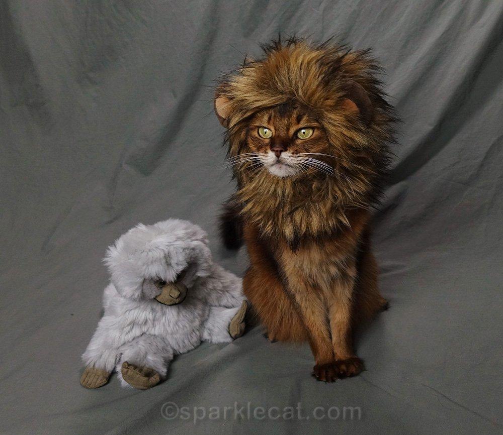 somali cat with monkey and lion mane