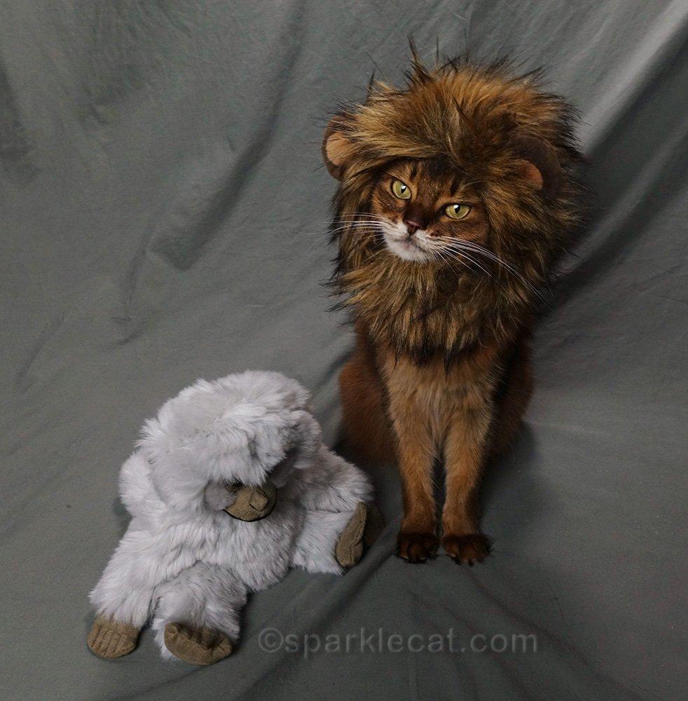 somali cat talking about world lion day