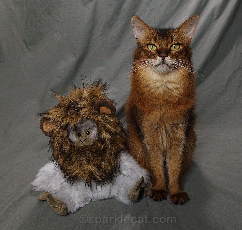 somali cat with monkey wearing lion mane