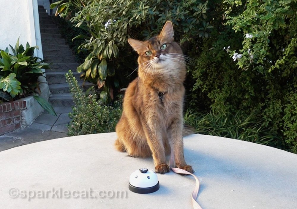 Why train your cat? Summer's human offers up some really good reasons in this cat training vlog.